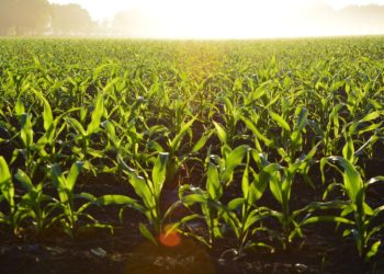 What You Should Know About GMOs