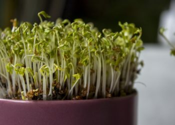 The Best Practices to Growing Food Indoors
