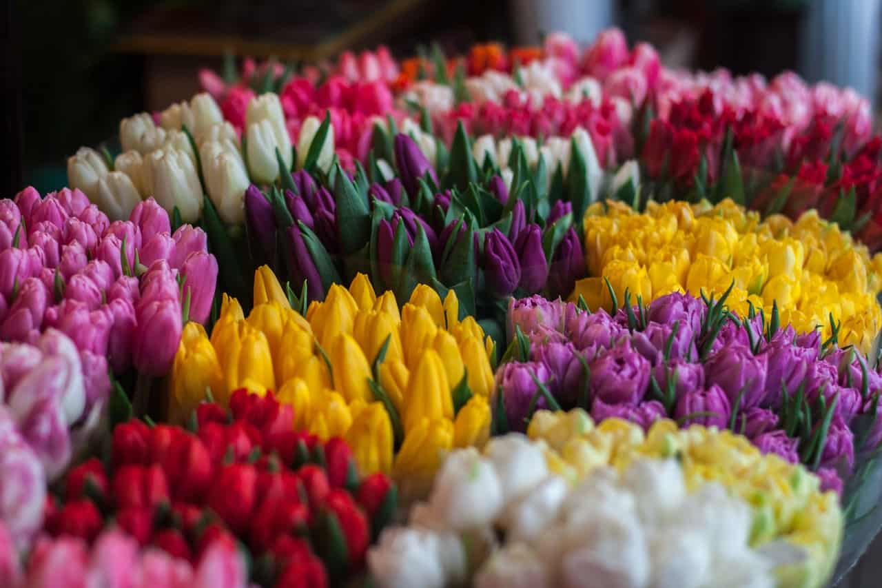 Flowers with Meaning: What Does Your Bouquet Mean?