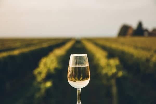 Bourgueil Wine